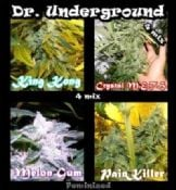 Dr Underground Killer Mix cheap feminised cannabis seeds sale